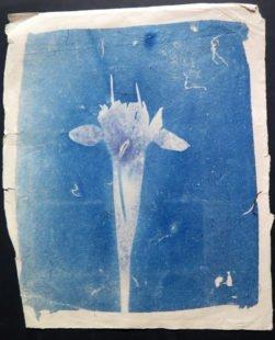 Daffodil-IMG_7384