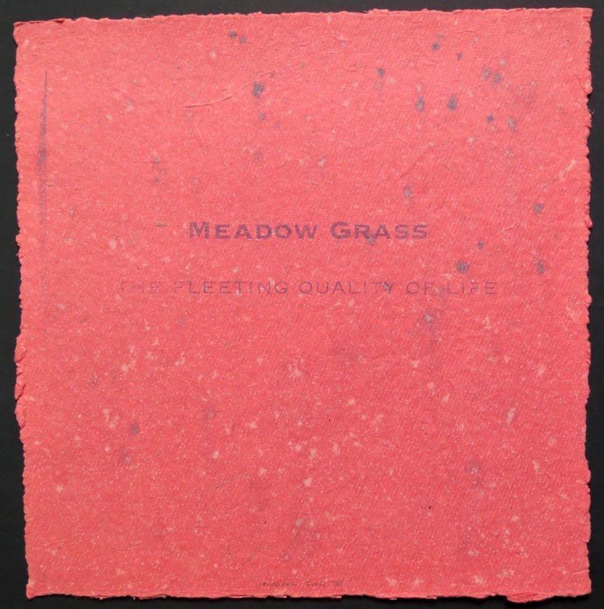 Meadow Grass-IMG_7381